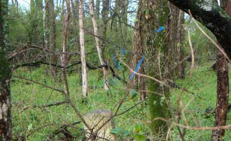 BLUE FLAG MARKERS 2, WAPANOCCA N.W.R. - Crittenden County, Arkansas | WAPANOCCA N.W.R. BLUE FLAG MARKERS 2 - Arkansas Gravestone Photos