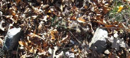 UNKNOWN 11, CADRON GAP - Faulkner County, Arkansas | CADRON GAP UNKNOWN 11 - Arkansas Gravestone Photos