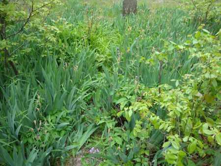 *HEIRLOOM PLANTS PHOTO 2,  - Faulkner County, Arkansas    *HEIRLOOM PLANTS PHOTO 2 - Arkansas Gravestone Photos