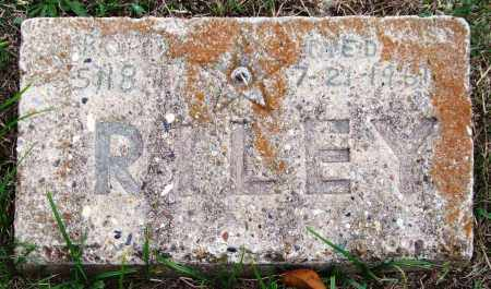 RILEY, - - Garland County, Arkansas | - RILEY - Arkansas Gravestone Photos