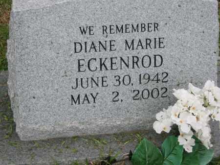 ECKENROD, DIANE MARIE - Miller County, Arkansas | DIANE MARIE ECKENROD - Arkansas Gravestone Photos