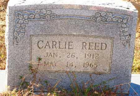 REED, CARLIE - Newton County, Arkansas | CARLIE REED - Arkansas Gravestone Photos