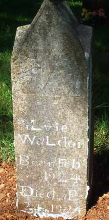 WALDEN, SILVIE - Newton County, Arkansas | SILVIE WALDEN - Arkansas Gravestone Photos