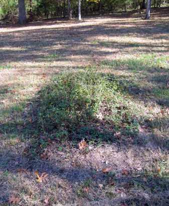 UNKNOWN, UNKNOWN - Randolph County, Arkansas | UNKNOWN UNKNOWN - Arkansas Gravestone Photos