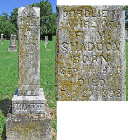 SHADDOX, COROLIE M - Benton County, Arkansas | COROLIE M SHADDOX - Arkansas Gravestone Photos