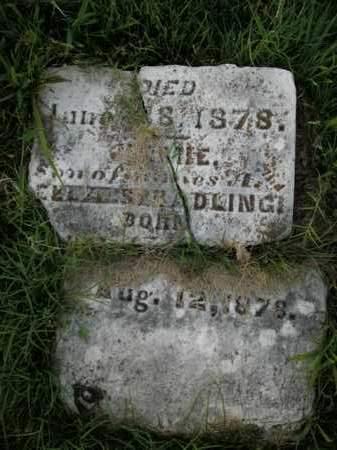 SPRADLING, JIMMIE - Boone County, Arkansas | JIMMIE SPRADLING - Arkansas Gravestone Photos