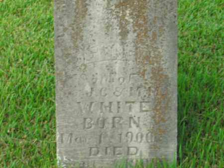 WHITE, DELBERT - Boone County, Arkansas | DELBERT WHITE - Arkansas Gravestone Photos