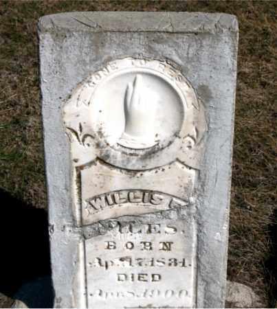 MILES, WILLIS E - Carroll County, Arkansas | WILLIS E MILES - Arkansas Gravestone Photos