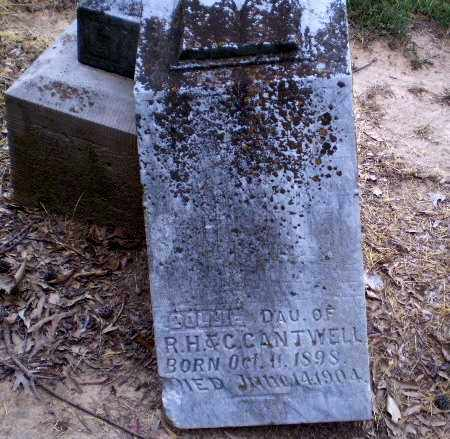 CANTWELL, DOLLIE - Clay County, Arkansas | DOLLIE CANTWELL - Arkansas Gravestone Photos